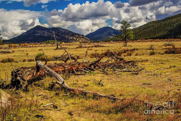 Photograph - A Long Life by Jon Burch Photography