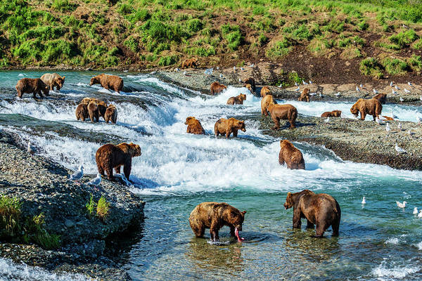 Grizzly Bears Photograph - A Lot Of Bears by Ian Stotesbury