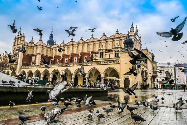 Wall Art - Photograph - A Lot Of Doves In Krakow Old City by S-f