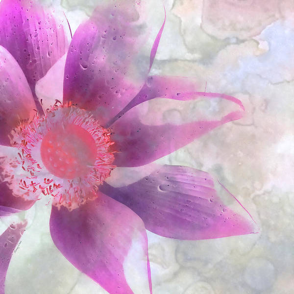 Silence Mixed Media - A Lotus Grows In The Mud by Stacey Chiew