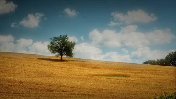 Photograph - A Machias Hillside by Guy Whiteley