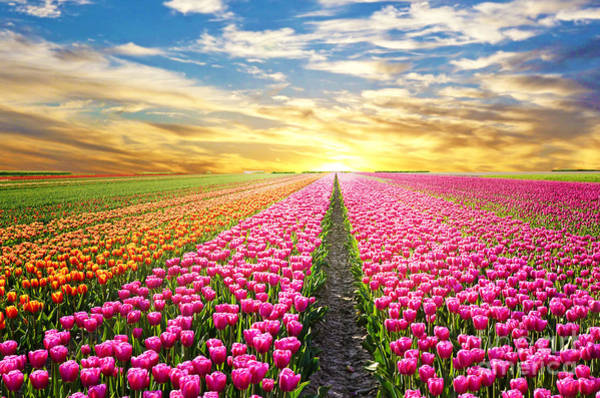 Florist Wall Art - Photograph - A Magical Landscape With Sunrise Over by Andrij Vatsyk