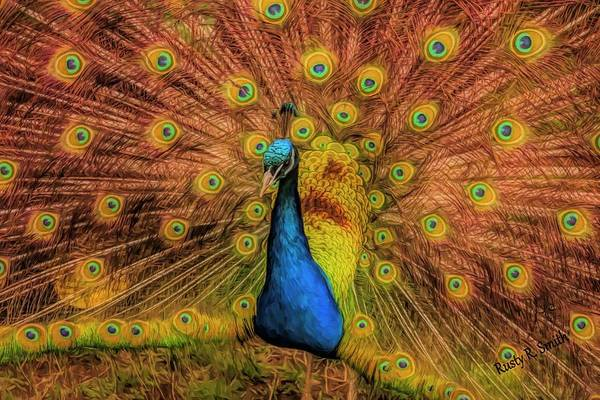 Digital Art - A Male Peacock Displaying. by Rusty R Smith