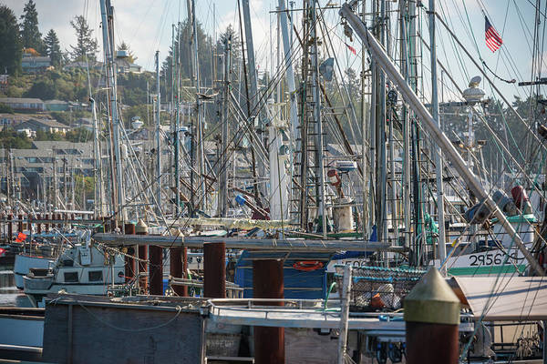 Photograph - A Mass Of Masts by Kristopher Schoenleber