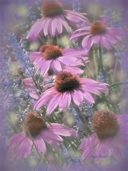 Photograph - A Meadow Symphony by Angela Davies