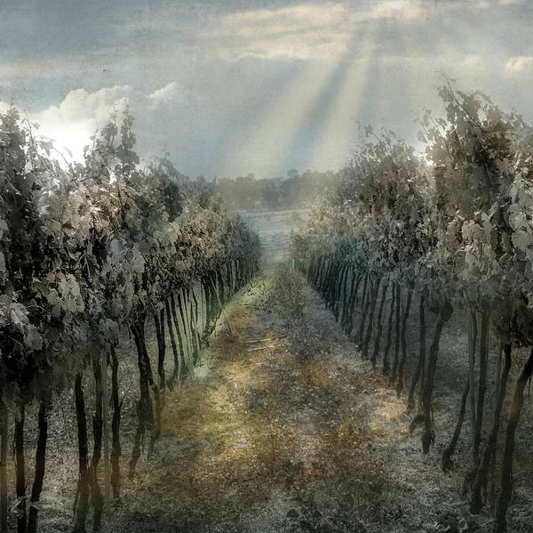 Photograph - A Mexican Vineyard by Barry Weiss