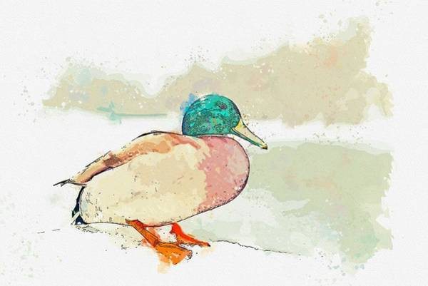 Protein Painting - A Migrating Loon, Oslo, Norway -  Watercolor By Adam Asar by Adam Asar