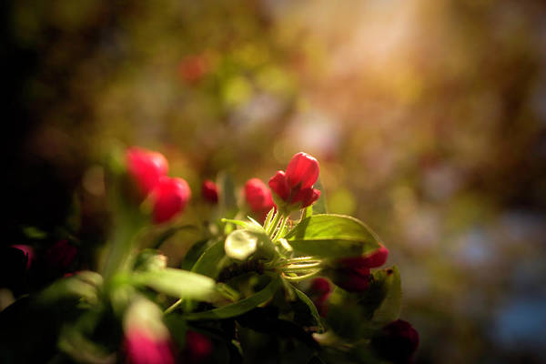 Photograph - A Moment In The Sun by Simmie Reagor