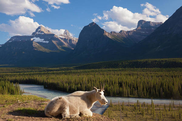 Art In Canada Photograph - A Mountain Goat On A Small Promontory by Mint Images/ Art Wolfe