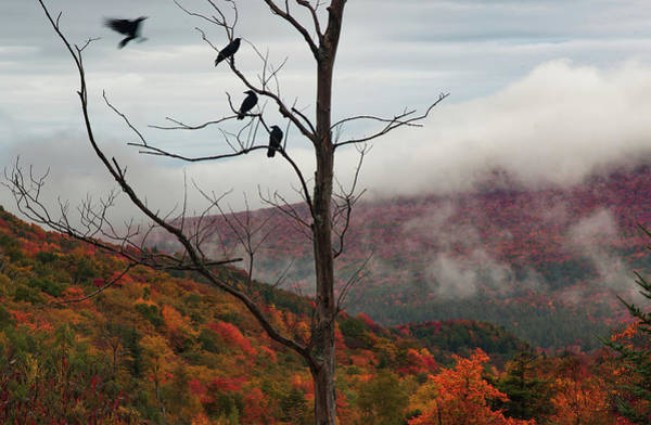 Photograph - A Murder Of Crows Gathering Over Lost River Road by Jeff Folger