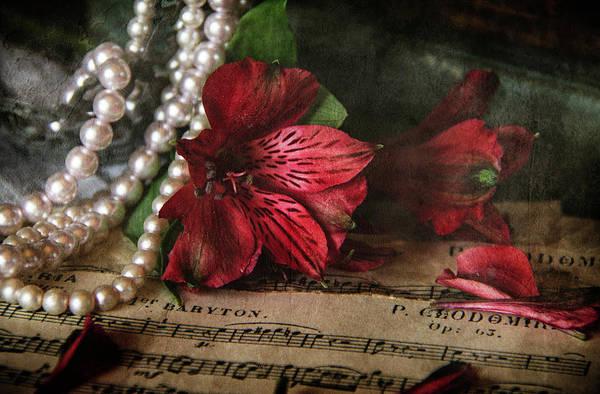 Alstroemeria Photograph - A Musical Night by Cindi Ressler