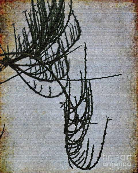 Digital Art - A Natural Abstract by Liz Alderdice