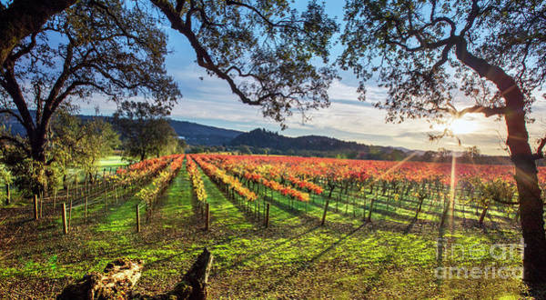 Wall Art - Photograph - A New Day In Napa by Jon Neidert
