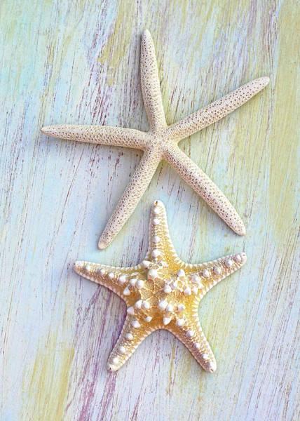 Photograph - A Pair Of Seastars by Kathi Mirto