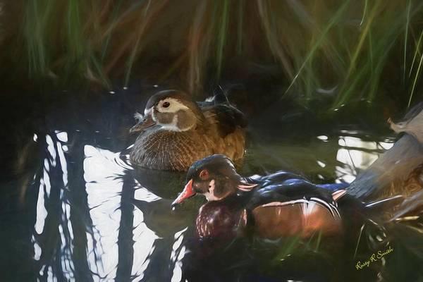 Digital Art - A Pair Of Wood Ducks. by Rusty R Smith
