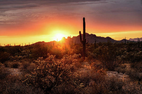 Wall Art - Photograph - A Peachy Sonoran Sunset  by Saija Lehtonen