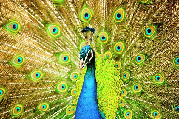 Made In Wall Art - Photograph - A Peacock by Made By  Vitaliebrega.com