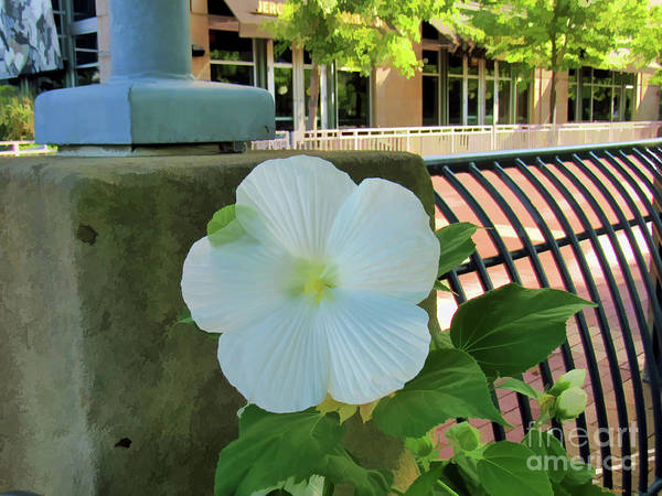 Photograph - A Perfect Welcome by Roberta Byram