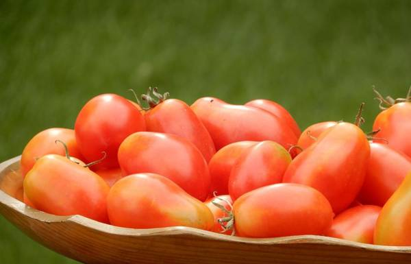 Photograph - A Platter Of Roma Tomatoes by Tina M Wenger