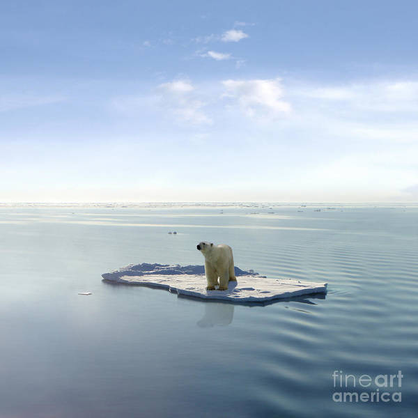 Wall Art - Photograph - A Polar Bear Managed To Get On One Of by Jan Martin Will