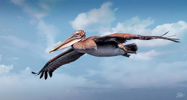 Photograph - A Portrait Of A Brown Pelican by Endre Balogh