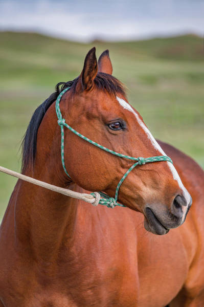 Photograph - A Portrait Of A Horse by Todd Klassy