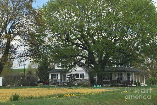 Photograph - A Pretty Spring Afternoon On The Farm by Christine Clark