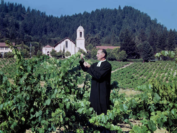 Winemaking Photograph - A Priest Tending A Vineyard by Tom Kelley Archive