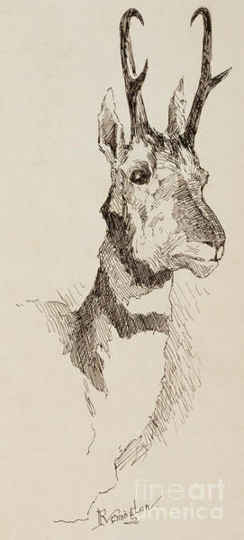 Wall Art - Drawing - A Pronghorn Antelope By Remington by Frederic Remington