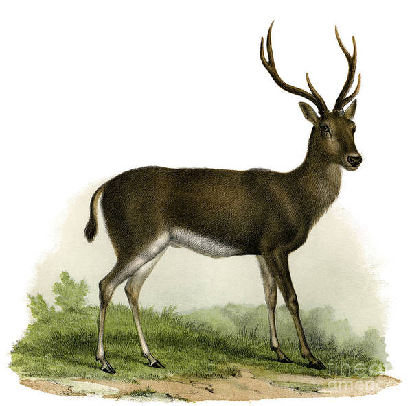 Wall Art - Painting - A Red Deer In A Landscape, 1860 by German School