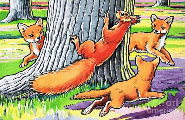 Wall Art - Painting - A Red Squirrel And Fox Cubs by Harry M Pettit