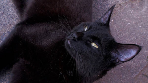 Photograph - A Relaxed Black Cat by Eye to Eye Xperience