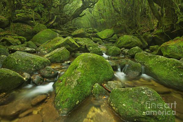 No People Wall Art - Photograph - A River Through Lush Rainforest Along by Sara Winter