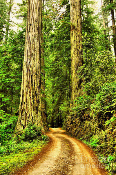 Wall Art - Photograph - A Road Between Two Redwoods by Jeff Swan