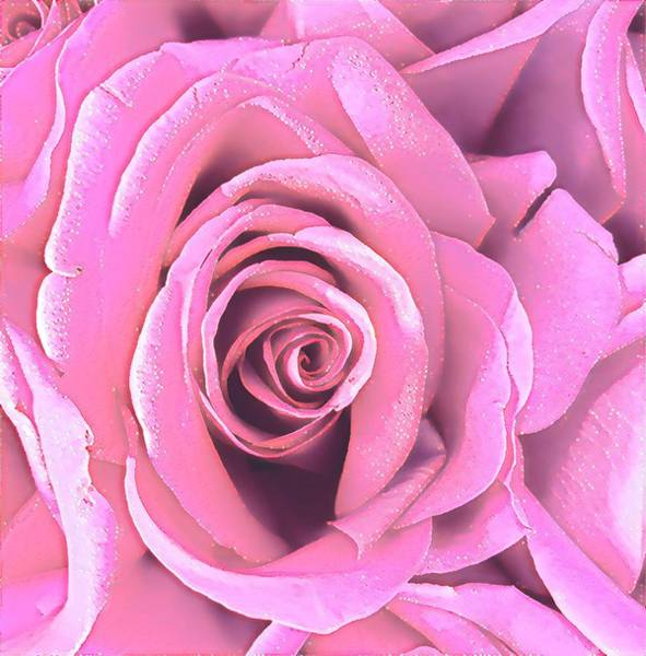 Photograph - A Rose Is A Rose Is A Rose In Pink by Joalene Young