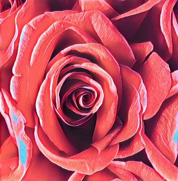 Photograph - A Rose Is A Rose Is A Rose by Joalene Young