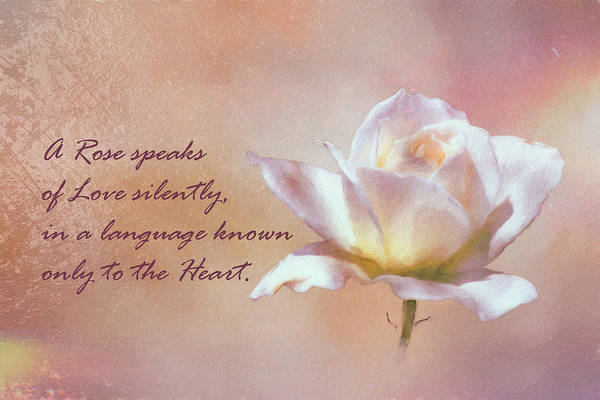 Esteem Photograph - A Rose Speaks Of Love Silently, In A Language Known Only To The Heart  by Linda Brody