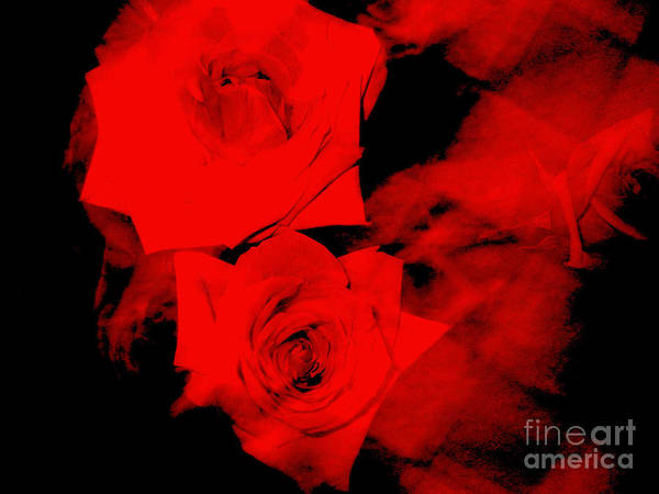Wall Art - Photograph - A Rose by Unknown