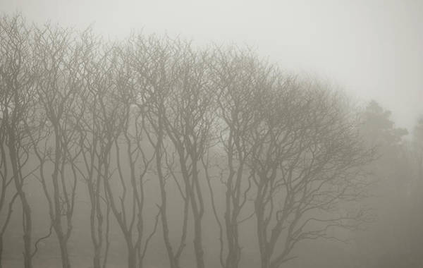 Trees In Fog Photograph - A Row Of Bare Trees In Fog by Sindre Ellingsen