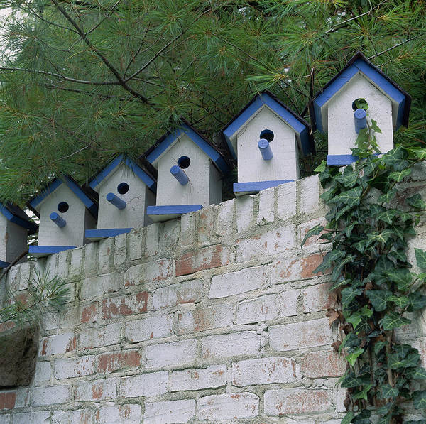 Brick Wall Photograph - A Row Of Bird Houses On Brick Wall by Richard Felber