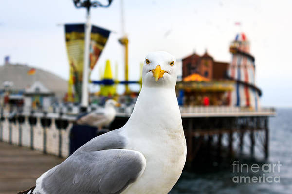 Wall Art - Photograph - A Seagull At Brighton, Uk. Shallow by Bobo Ling