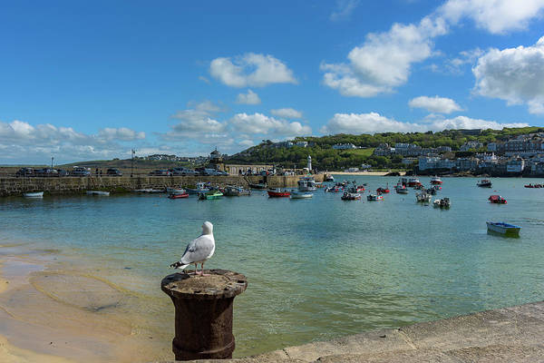 Photograph - A Seagull Dreaming At The Harbour by Eddy Kinol