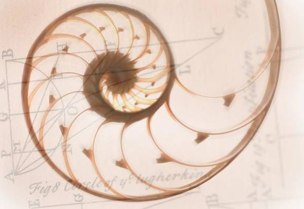 Multiple Exposure Digital Art - A Seashell Drawing On Top Of A by Tetra Images