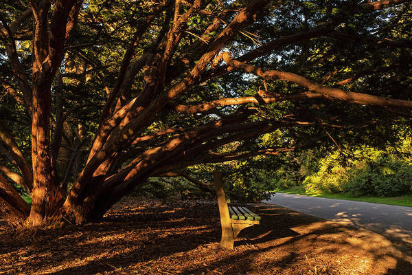 Photograph - A Shaded Bench At The Arnold Arboretum Jamaica Plain Ma Jp Boston Ma by Toby McGuire