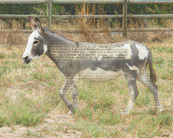 Photograph - A Simple Donkey by Jennifer Grossnickle