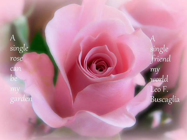 Wall Art - Photograph - A Single Rose by Karen Cook