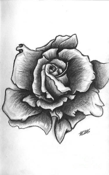 Drawing - A Single Rose by Marissa McAlister