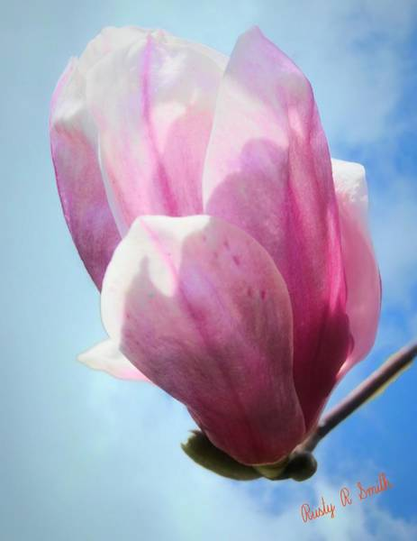 Digital Art - A Single Tulip Tree Blossom. by Rusty R Smith