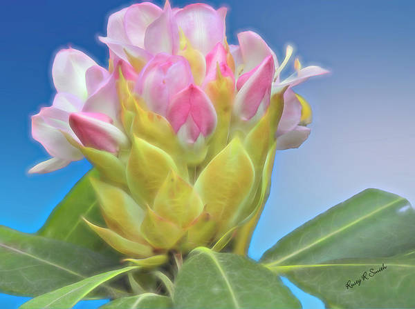 Digital Art - A Single Wild Rhododendron Blossom. by Rusty R Smith