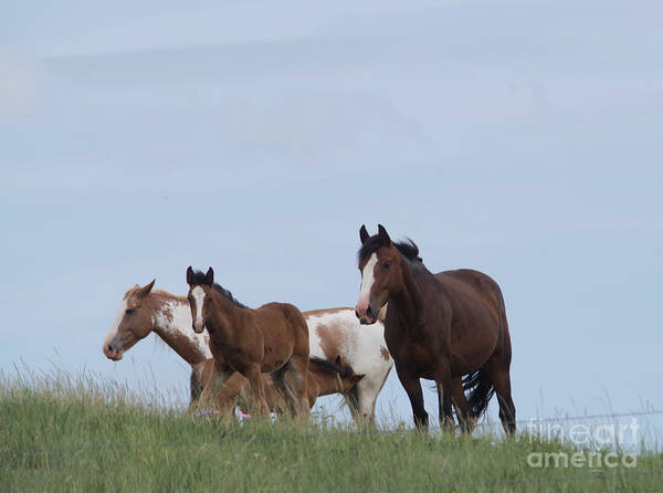 Wall Art - Photograph -  A Small Herd Of Horses by Jeff Swan